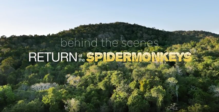 'BEHIND THE SCENES' RETURN OF THE SPIDER MONKEYS