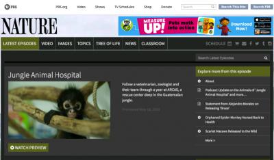 atelesfilms_jungle animal hospital