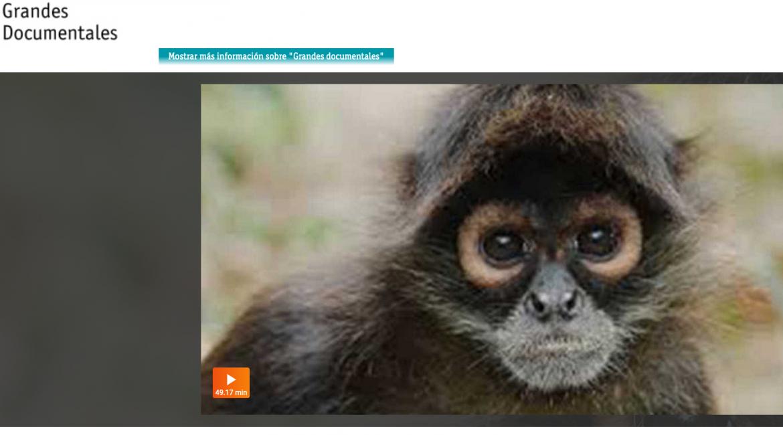 El retorno de los monos araña en La 2 de TVE