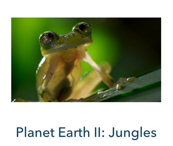 Planet Earth 2 Jungles – FINALIST for World Wildlife Day Showcase