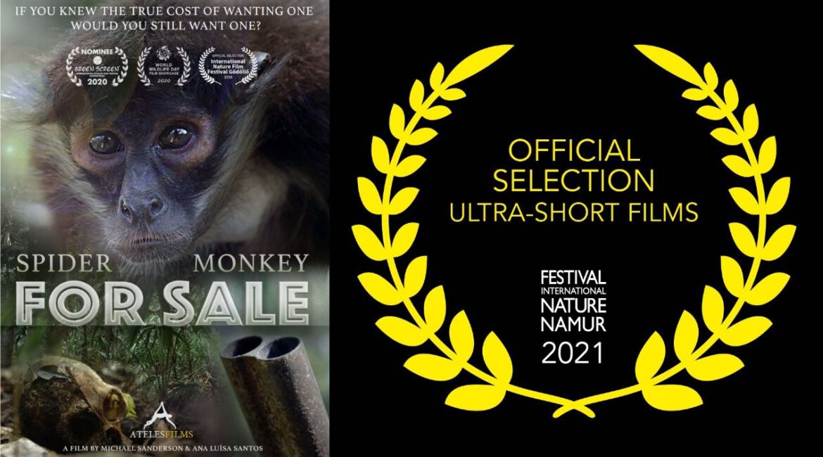 """""""Spider Monkey for Sale"""" as Finalist in the Festival International Nature Namur in Belgium"""